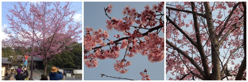 Cherry Blossom tree Collage