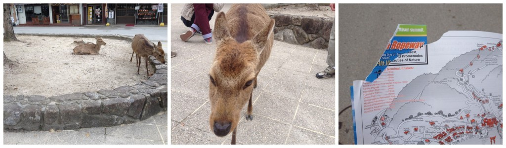 Miyajima deer will eat paper and clothing, be warned