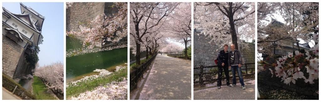 Cherry blossom at Kanazawa Castle