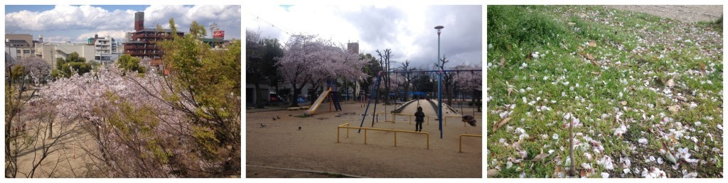Cherry blossoms blowing in the wind as kids play in the park