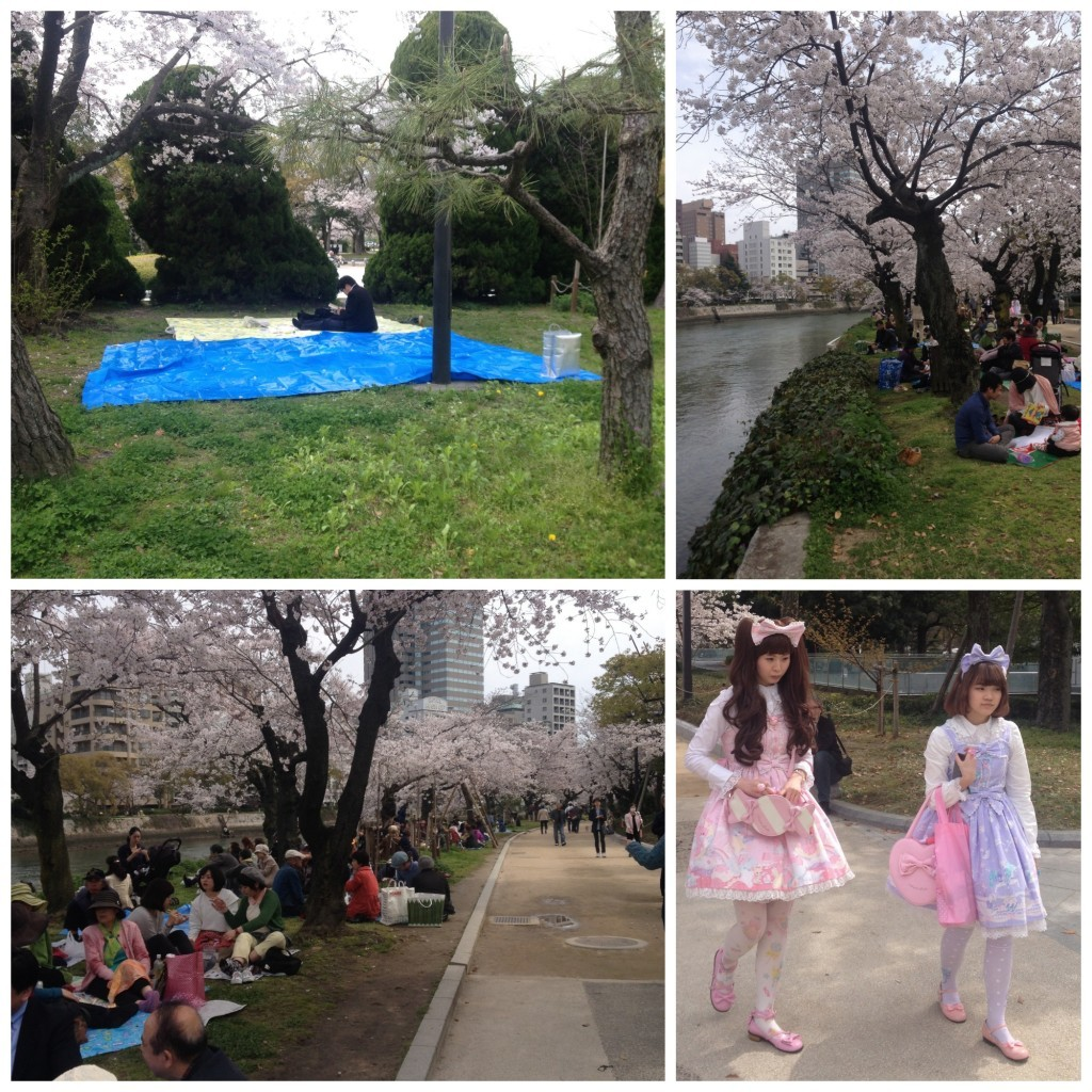 Hiroshima cherry blossoms along the Metoyasu-gawa river