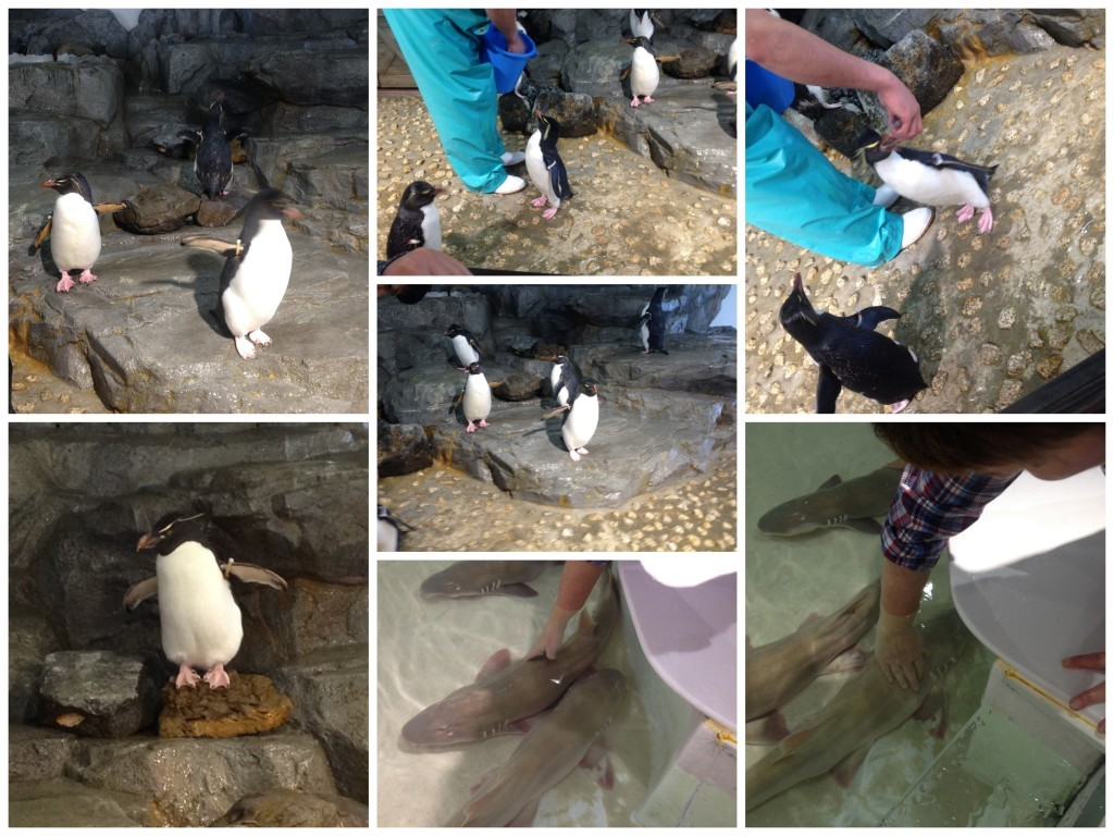 Penguin feeding and touching a shark