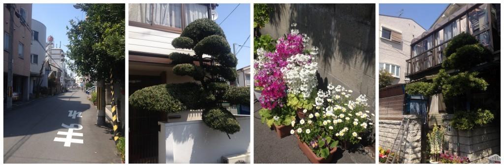 Street view in Sembayashi-omiya, lovely manicured trees
