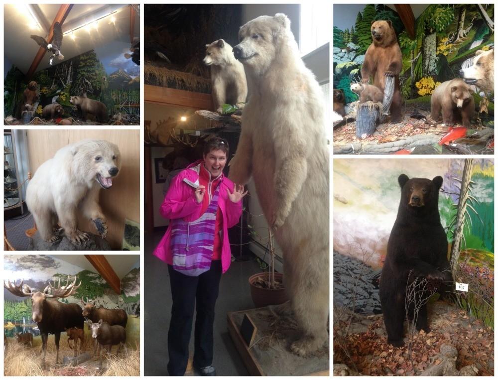 Bears in Alsaka