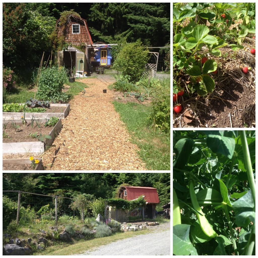 Shasta & Brian's garden