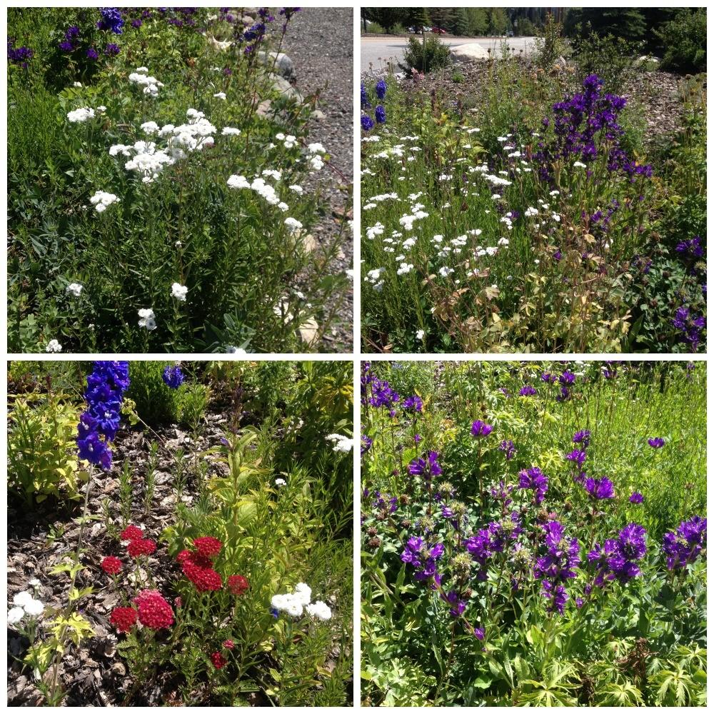 Flowers in Keystone