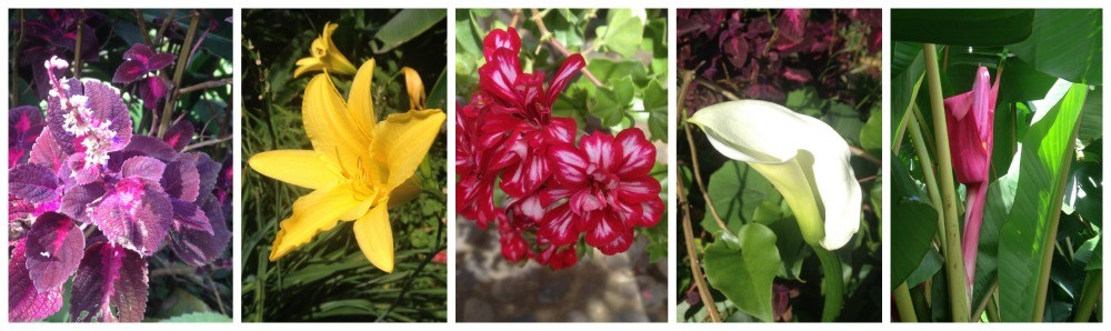 Some of the flowers from the hostel garden in Jardin