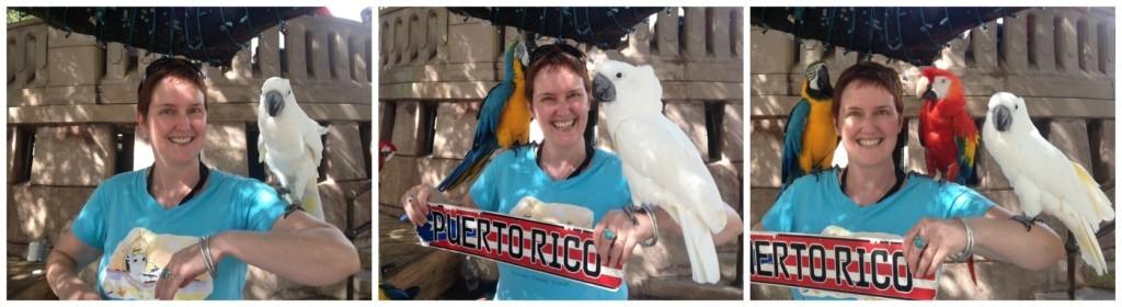 1,2, & 3 parrots