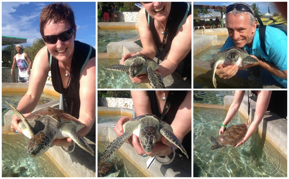 Holding turtles on Grand Cayman