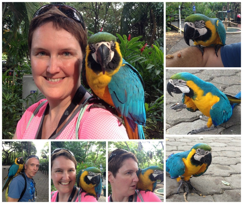 Macaws and other birds at Cartagena cruise terminal