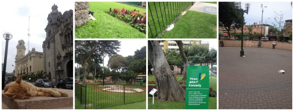 Parque John F. Kennedy in Lima full of cats