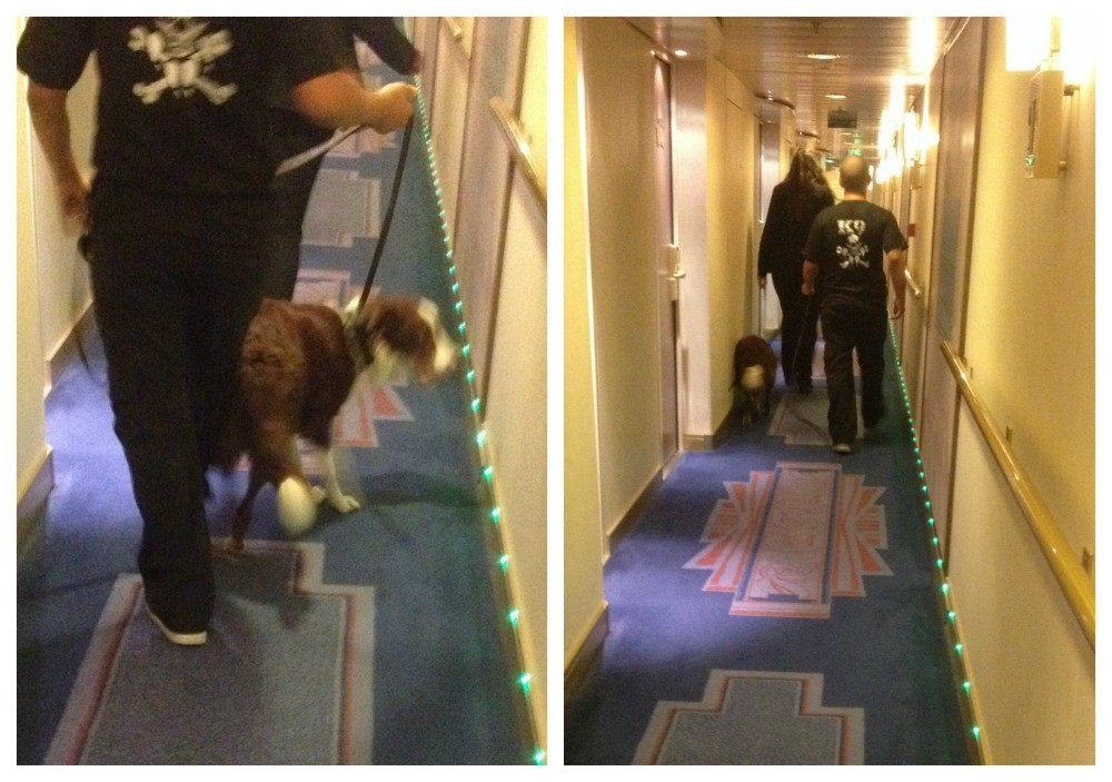 A K9 dog on board the MSC Magnifica cruise ship