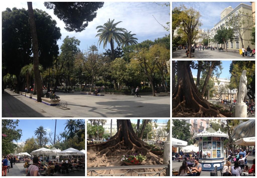 Plaza de mina Cadiz