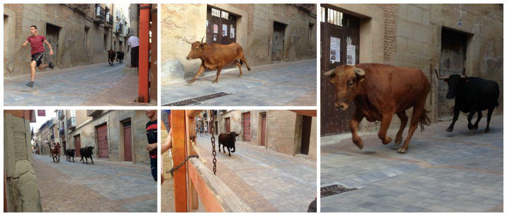 The bull running in Los Arcos