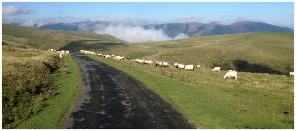walking in the Pyrenees mountains on the Camino way 2015