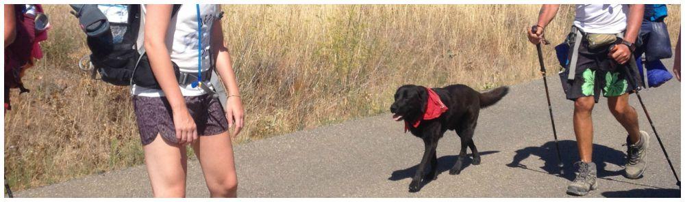 Dogs also walk the Camino