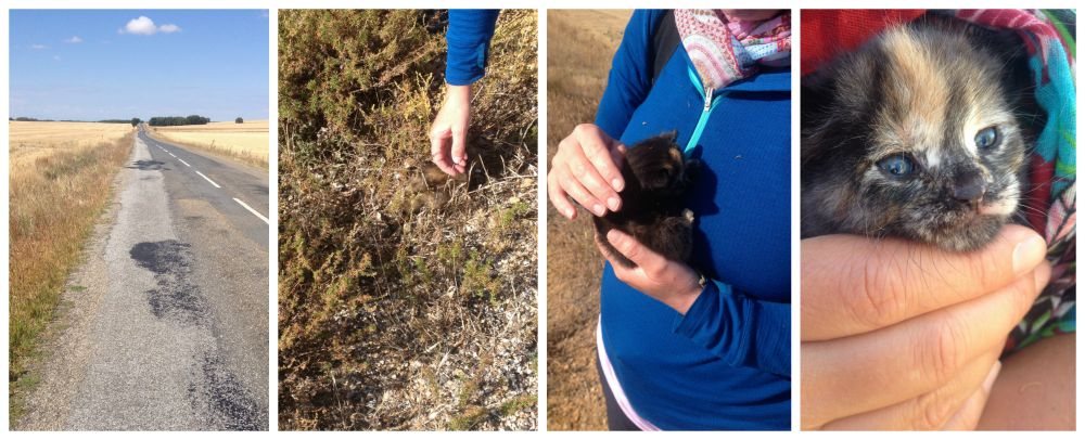 Finding two kittens on the edge of the road