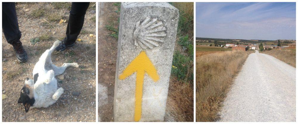 Stray dog, Yellow Camino arrows, entering Calzadilla De La Cueza