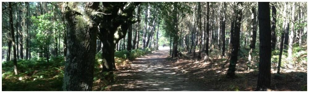 Enchanted forest on the Camino de Santiago