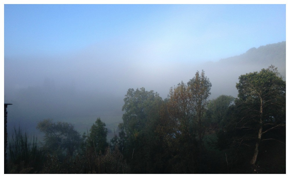 Foggy morning on the way