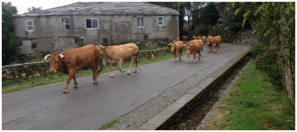 Hospital has more cattle than people