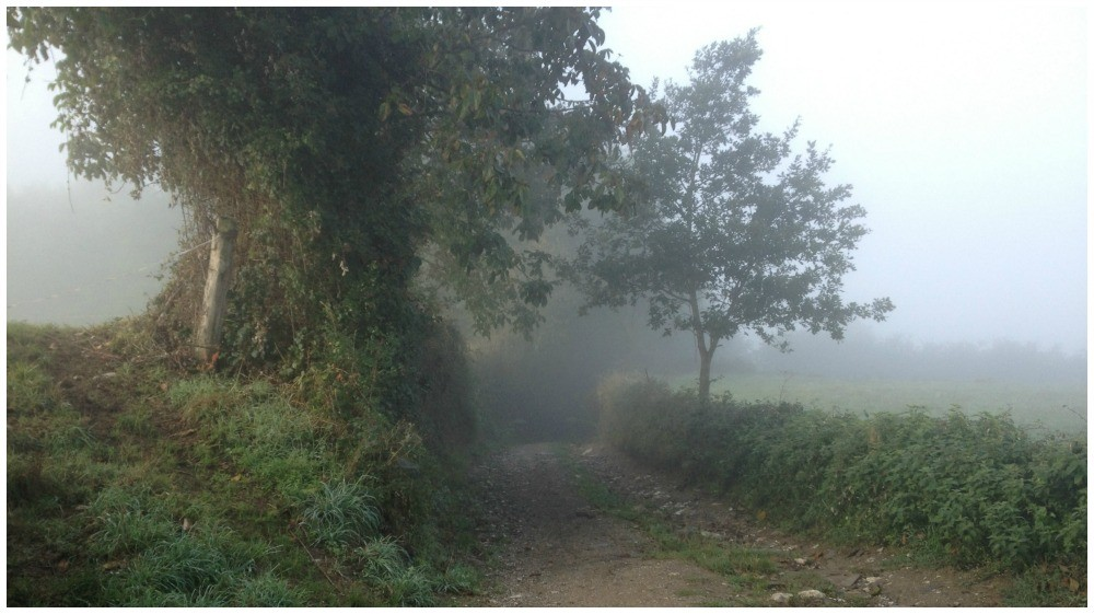 The camino in fog this morning
