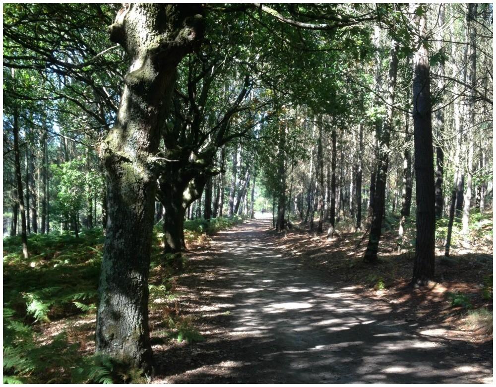 Through the forest near Gonzar