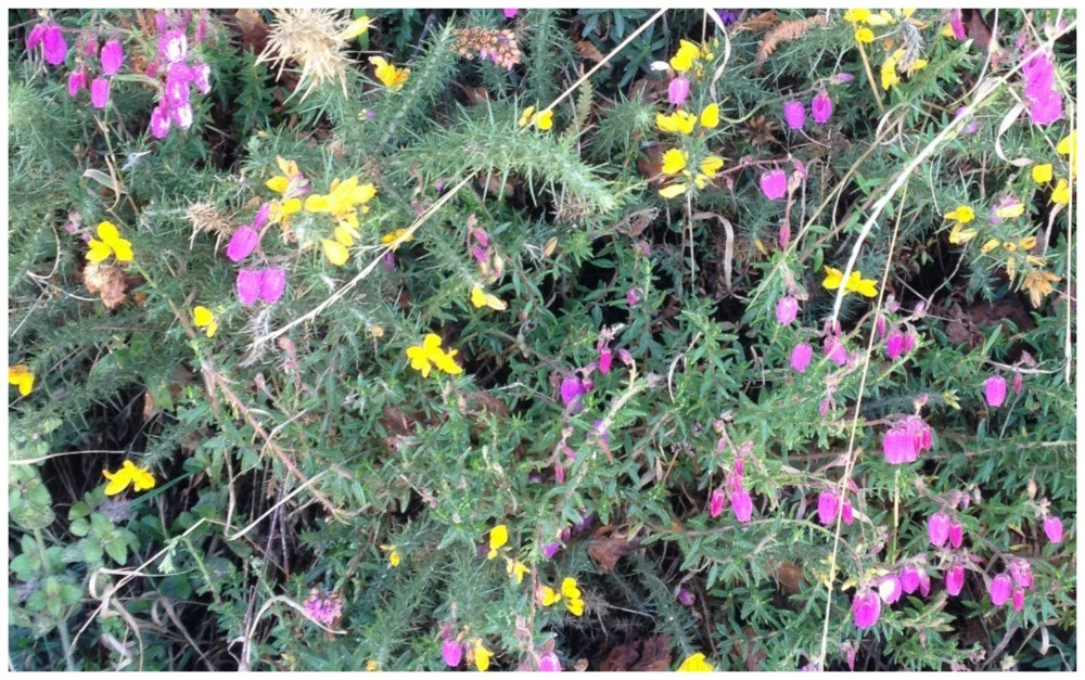 Yellow and purple wild flowers on the Camino