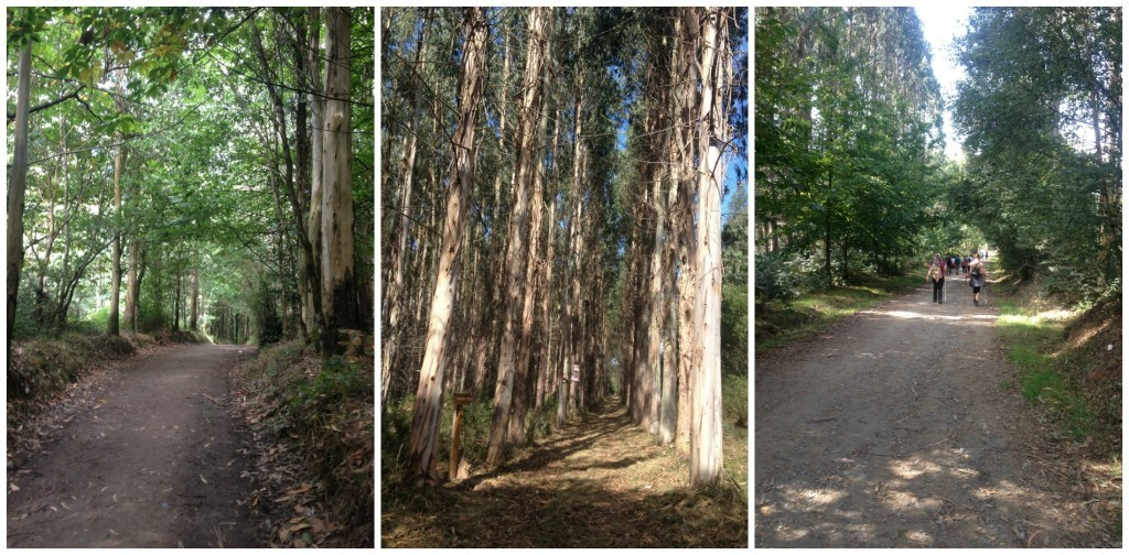 walking through wonderful forests on the Camino today