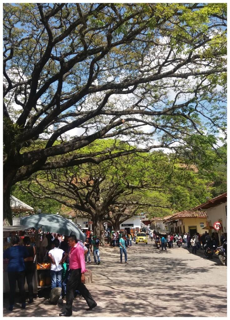 Wonderful trees line the main square