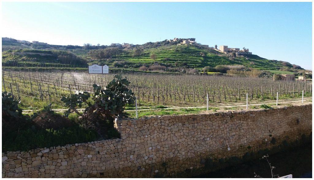Vineyard on Gozo