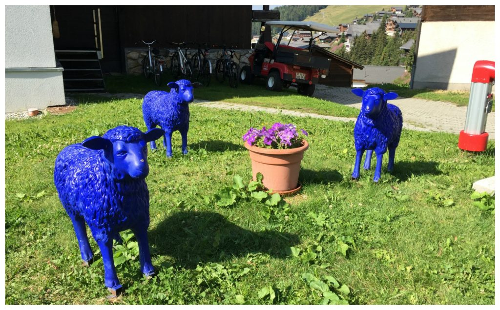 Ba Ba Blue Sheep...