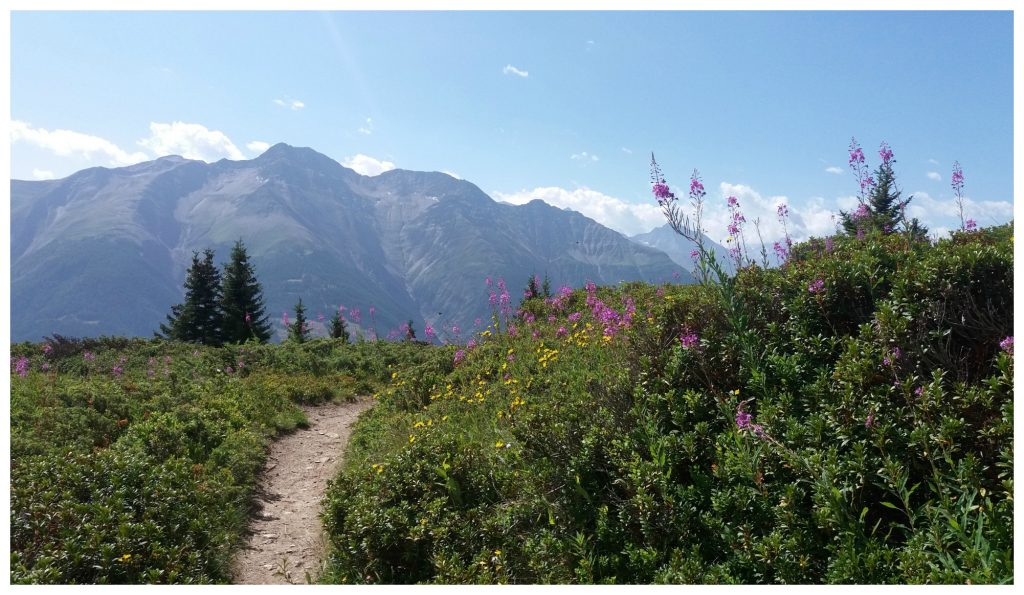 Flowers, mountains and clean air