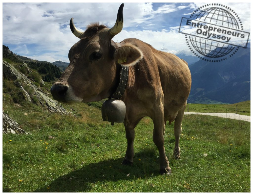 Wonderful cow on the alp in Switzerland