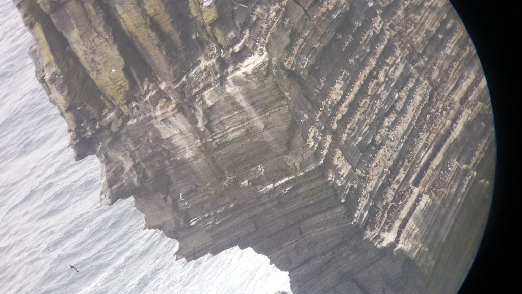 Seabirds at the Cliffs of Moher