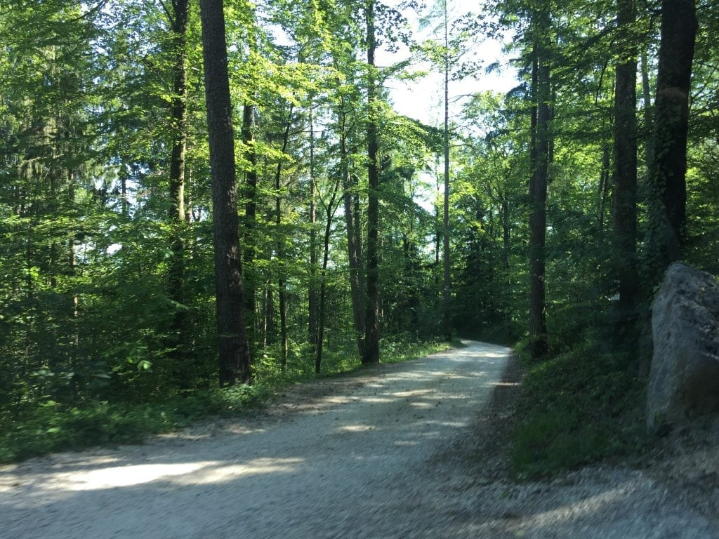 Drive up through the forest