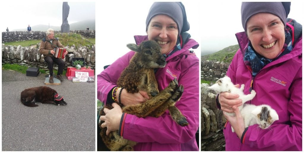 Ring of Kerry tour animals