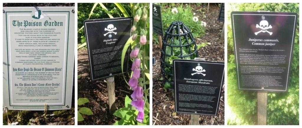 The Poison Garden at Blarney Castle