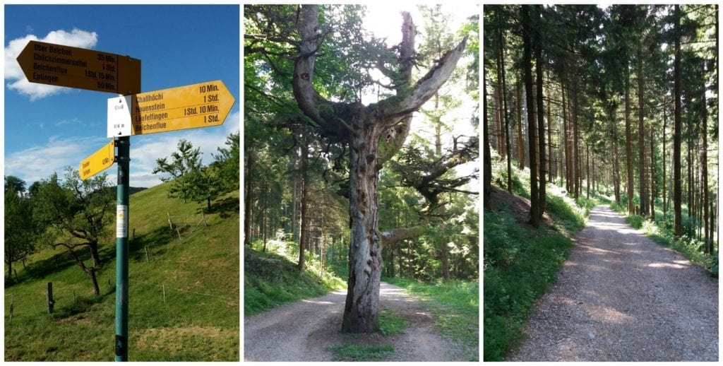 The 'wanderung' way from Chall to Belchenflue