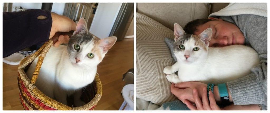 Natalie cat